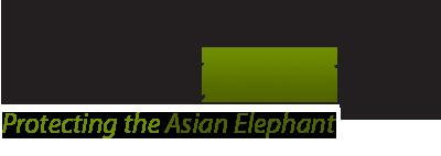 Elefantasia