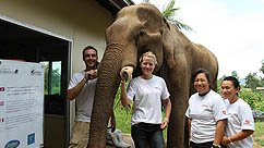 Elephant Welfare and Veterinary Care